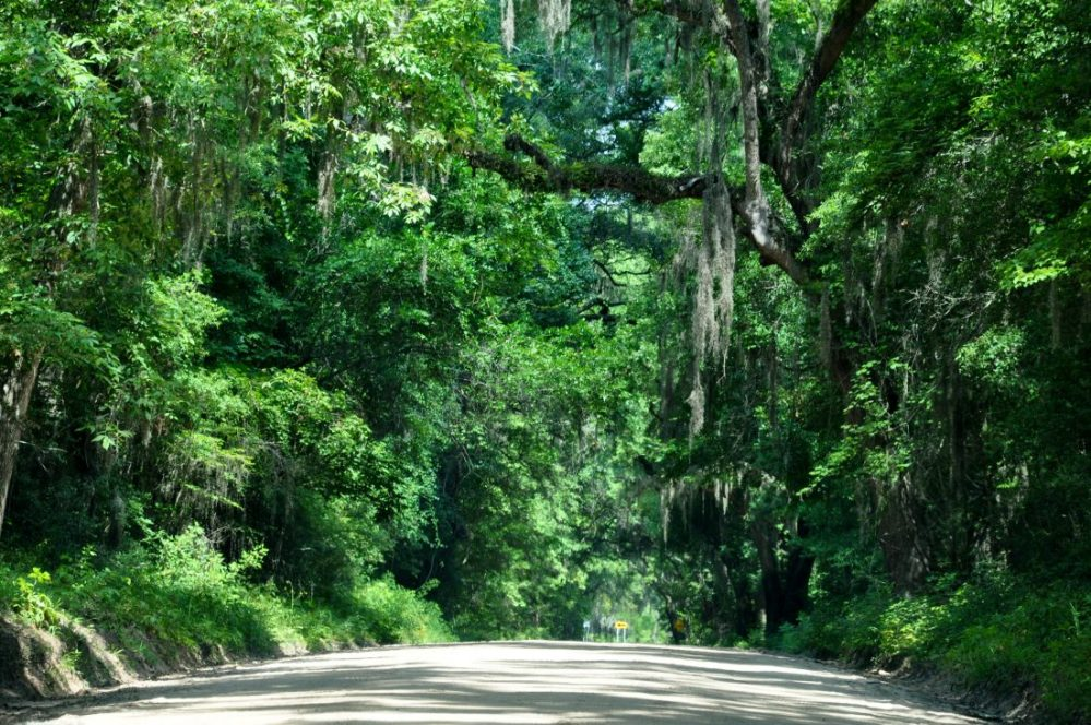 SOUTH CAROLINA : Botany Bay Plantation