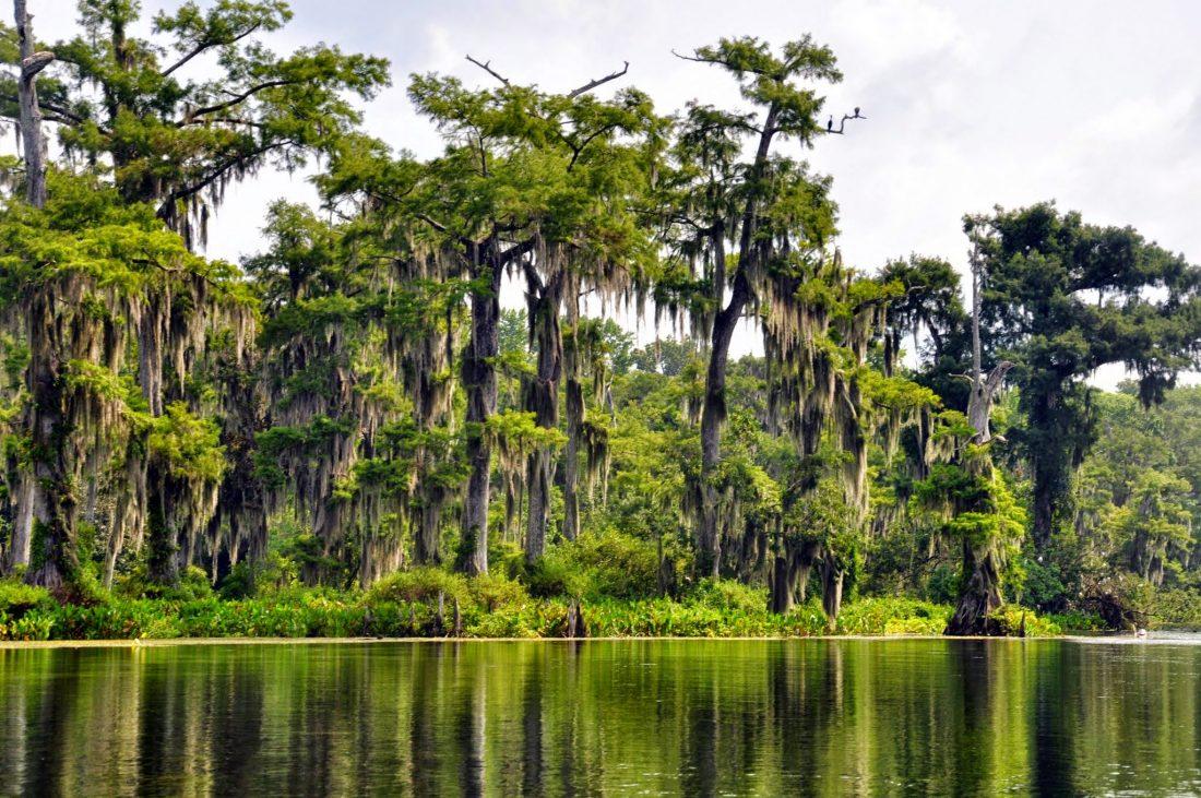 FLORIDA : Wakulla Spring