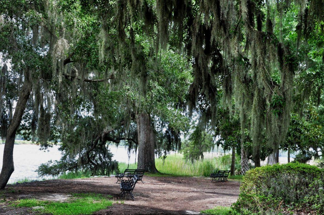 SOUTH CAROLINA : Drayton Hall Plantation spanish moss
