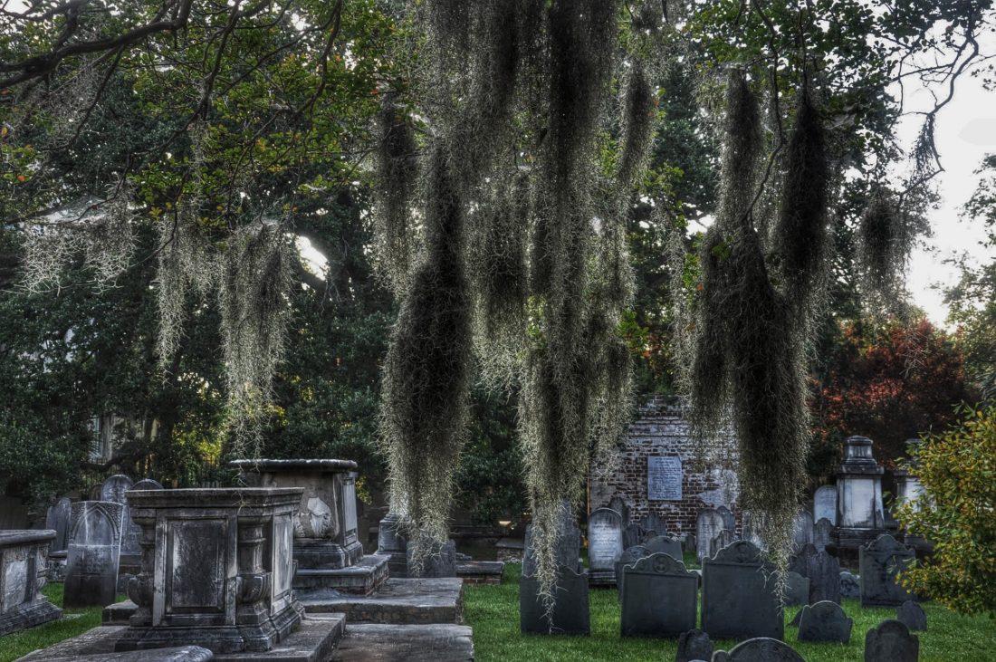 SOUTH CAROLINA : Charleston Spanish Moss in Circular Congregational Church