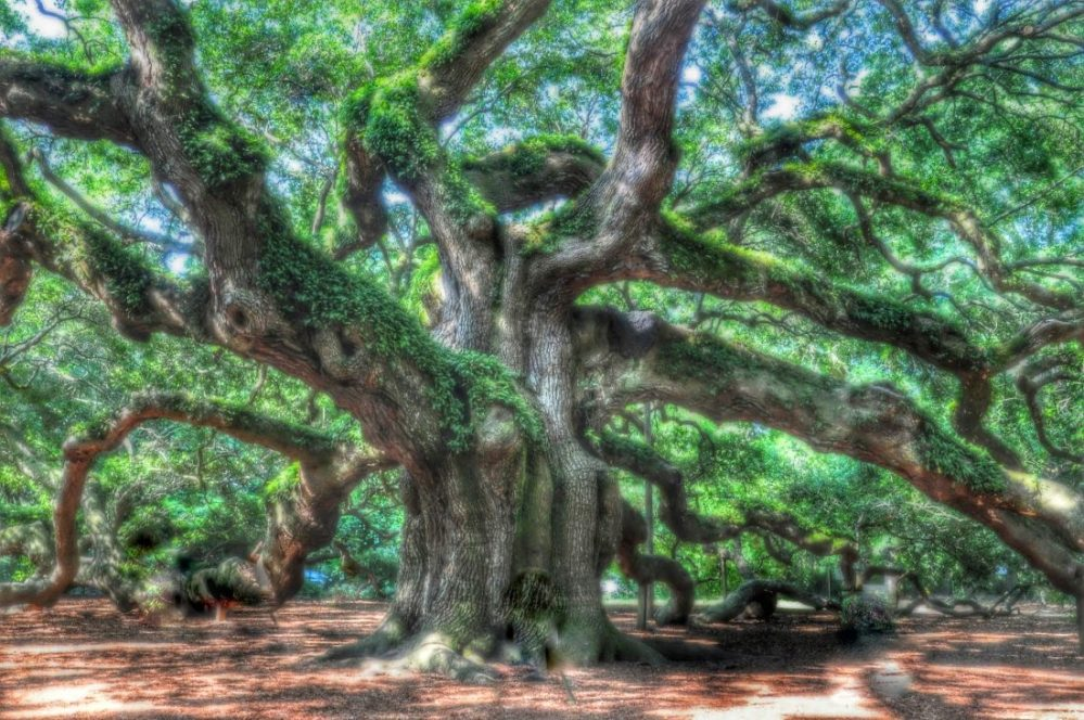 SOUTH CAROLINA : Angel Oak