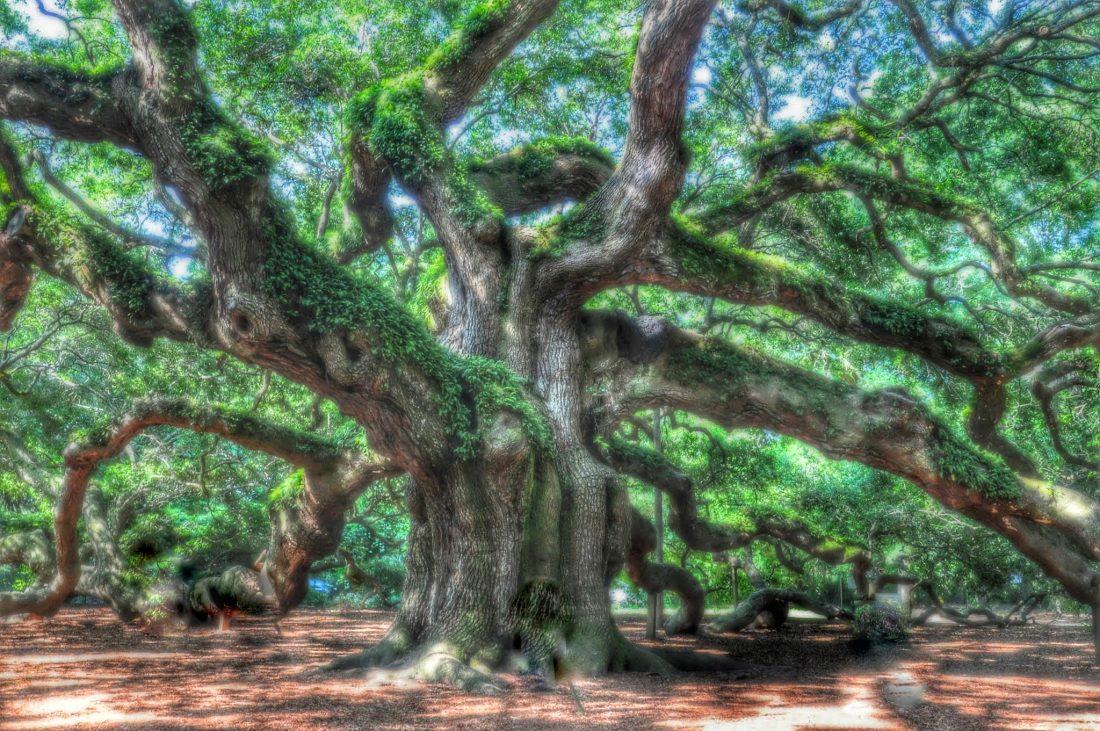 SOUTH CAROLINA : Angel Oak