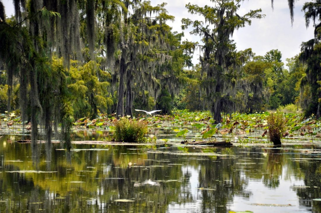Louisiana : Lake Martin (Norbert Leblanc Swamp Tour)