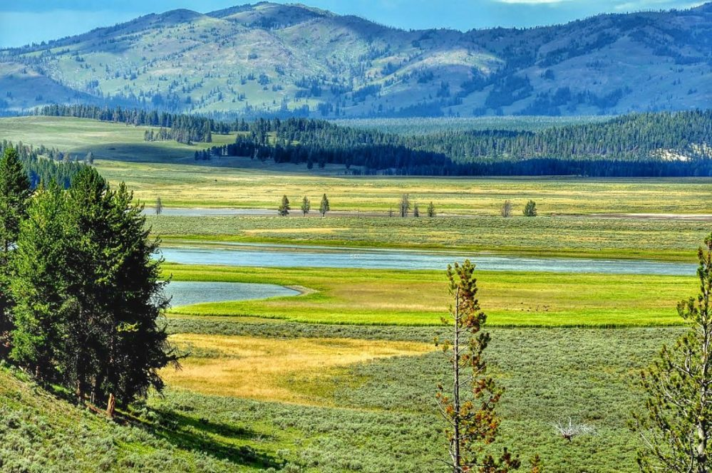 Yellowstone : Hayden Valley