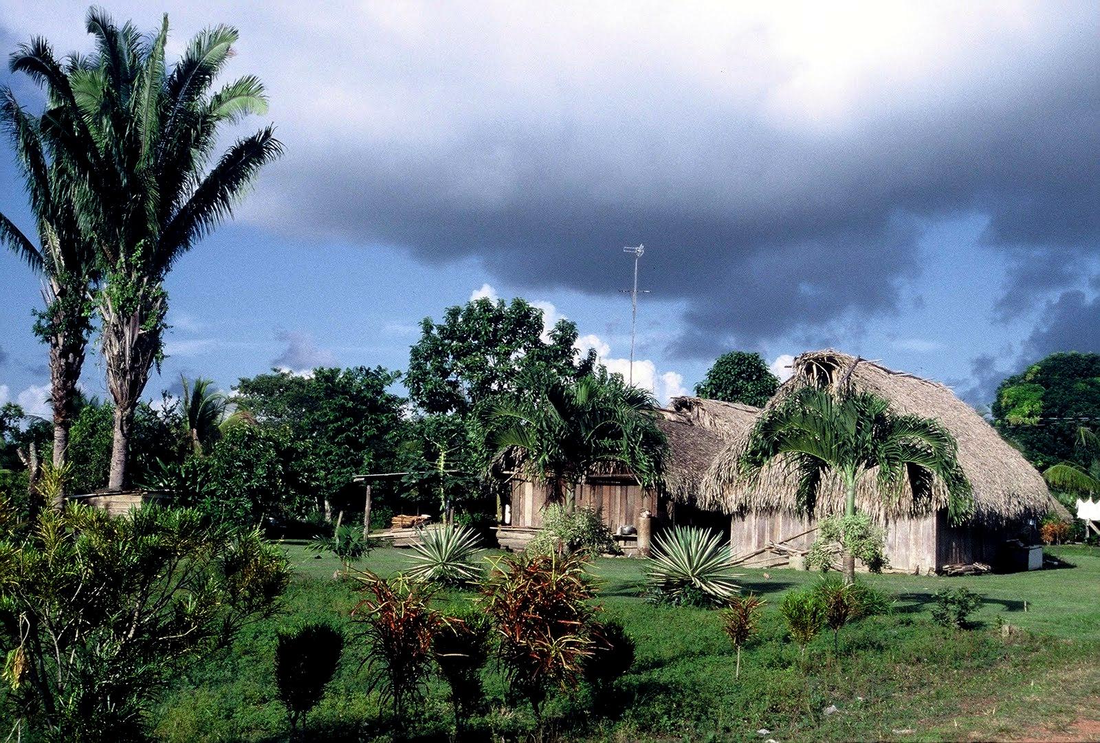 Belize : COCKSCOMB BASIN WILDLIFE SANCTUARY & JAGUAR PRESERVE