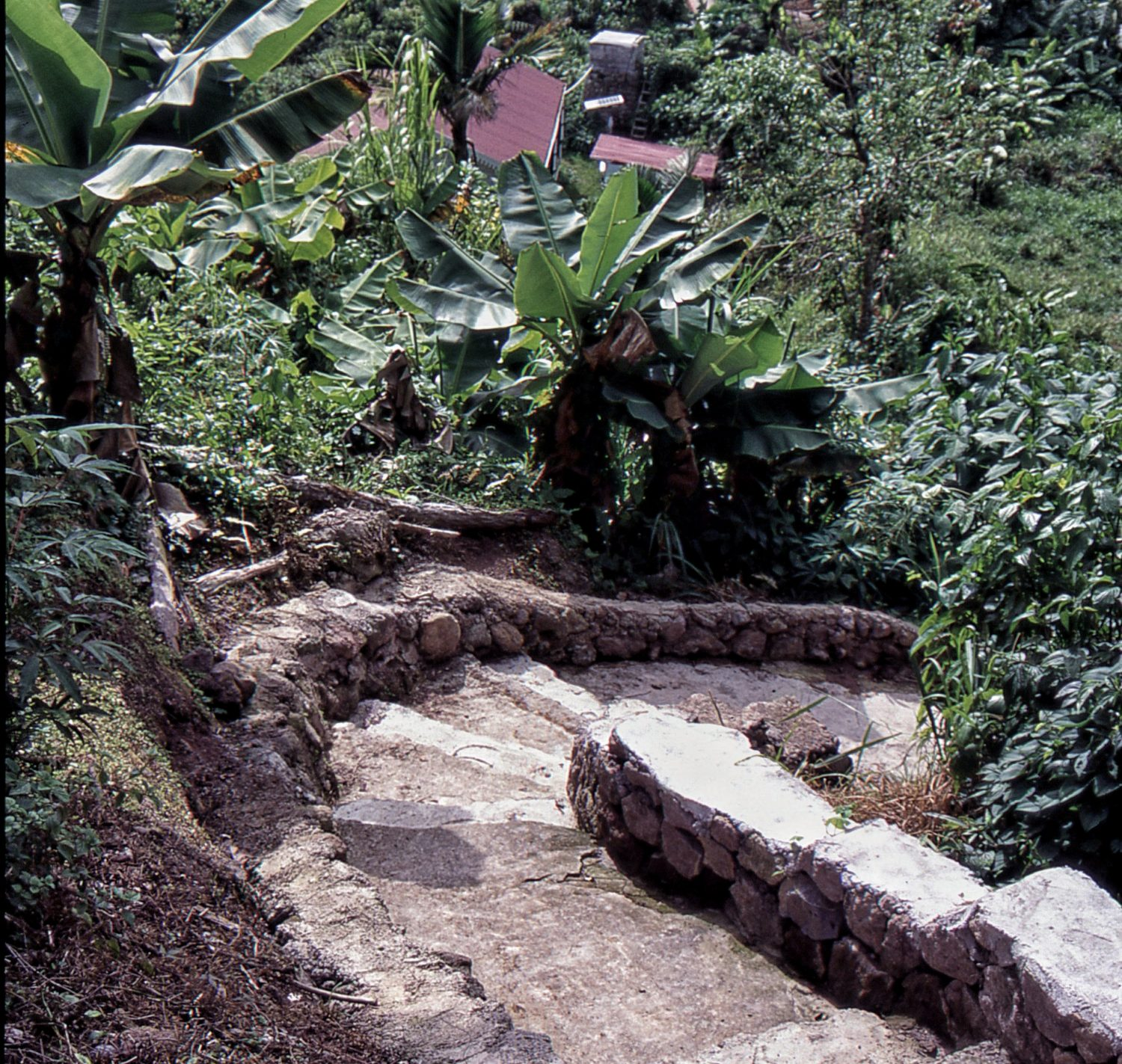 Saba : Mount Scenery Trail