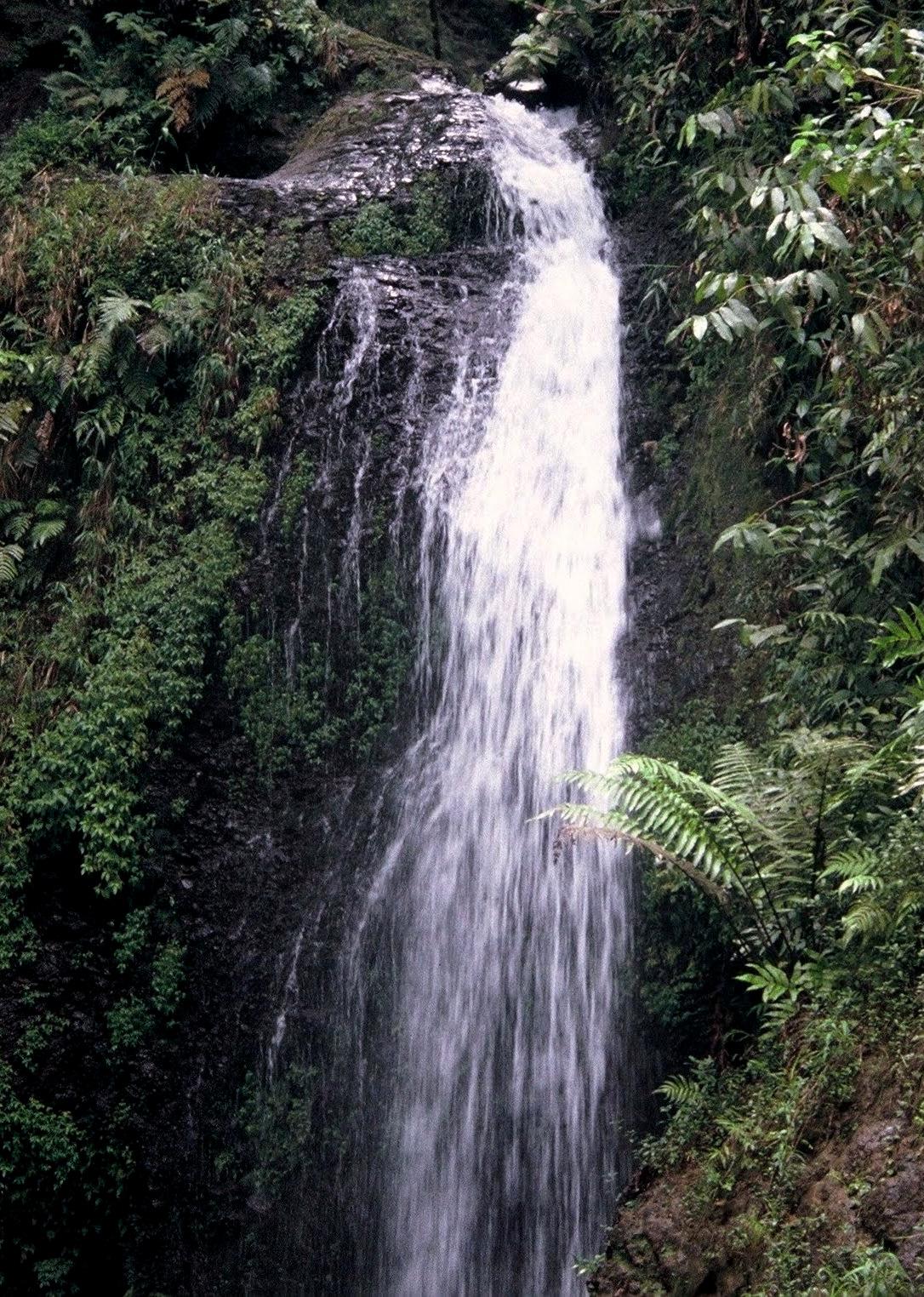 Martinique trace