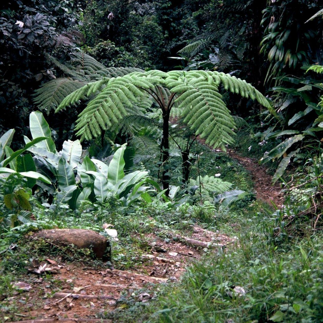 Martinique : Trace