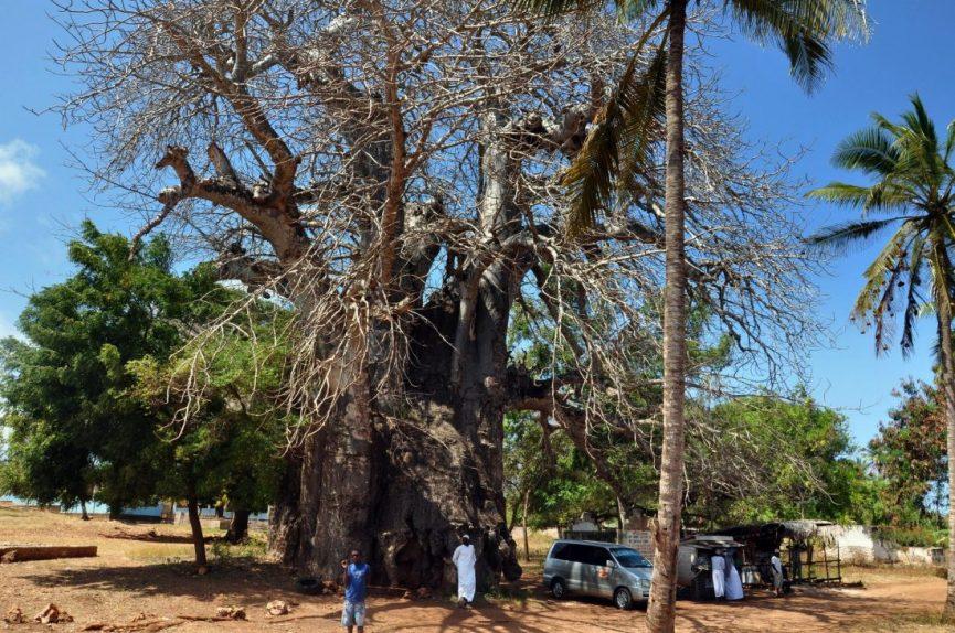 Zanzibar : Kizimkazi Dimbani