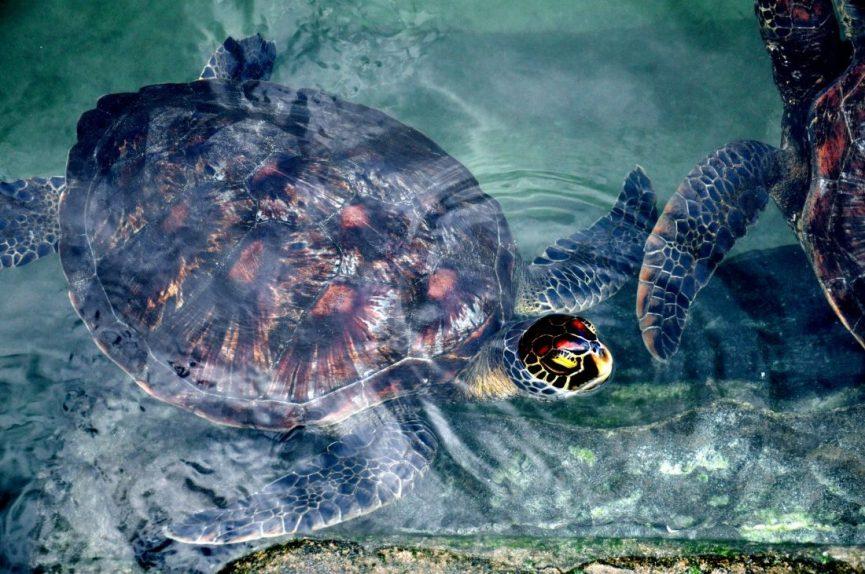 Nungwi Mnarani Aquarium