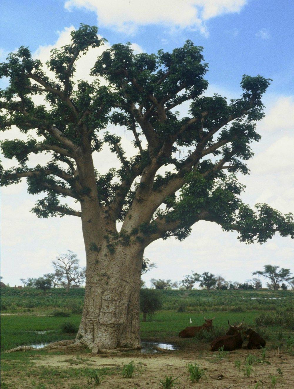 BENIN : Niger Border