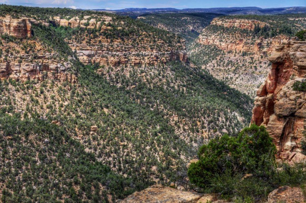 Mesa Verde : Canyon view