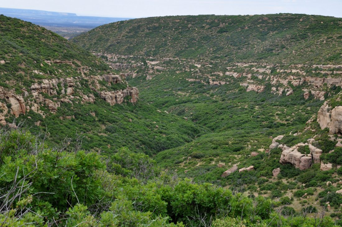Mesa Verde : McElmo Canyons View