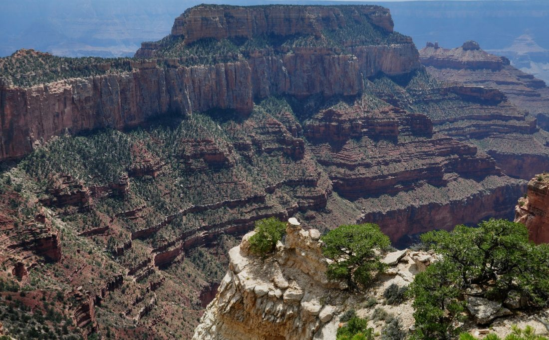 Grand Canyon : North Rim (Cape Royal)