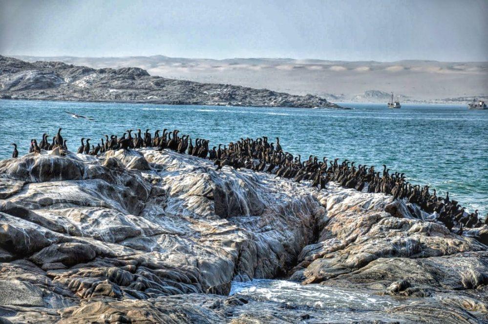 Luderitz : Shark Island