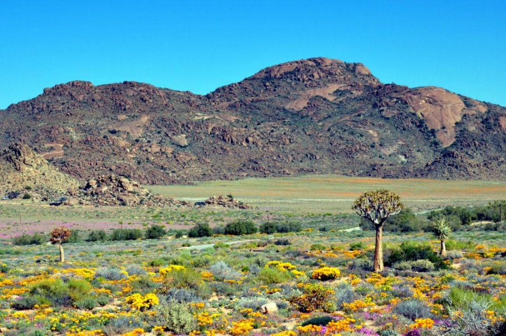 South Africa : Goegap Nature Reserve