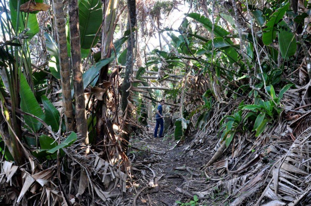 Hluleka Nature Reserve : indigenous forest