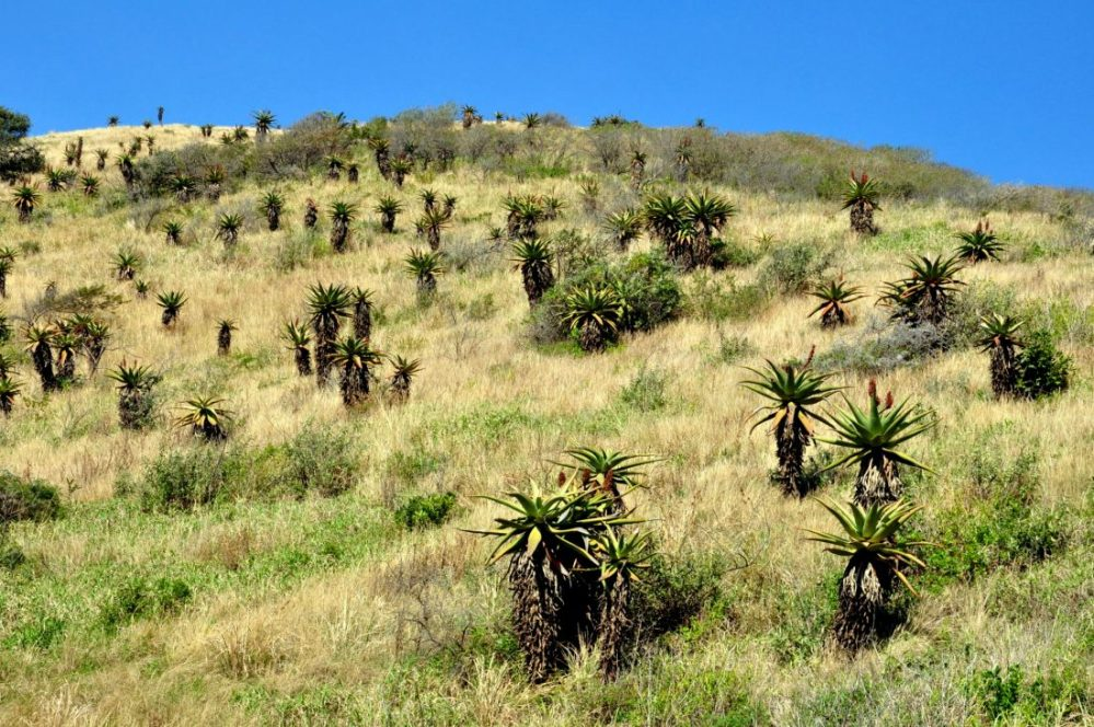 South Africa : Silaka Nature Reserve