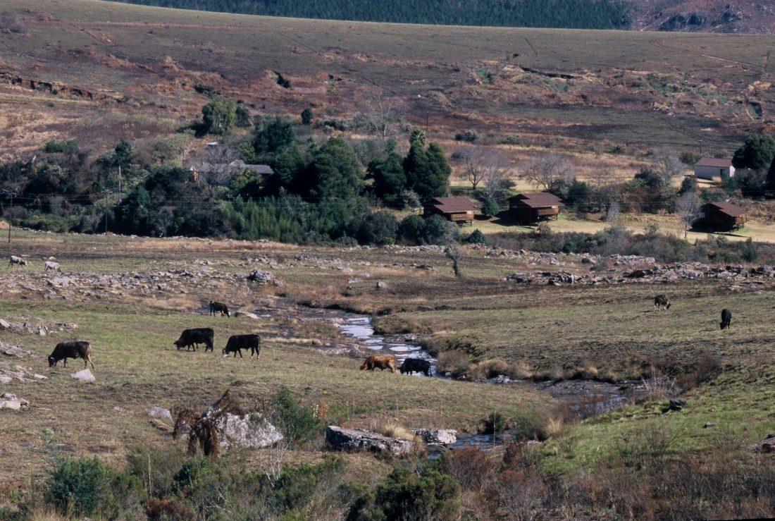 South Africa : Lisbon Creek