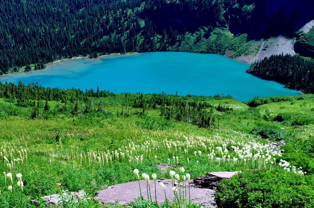 Grinnell Lake Trail : Bear Grass