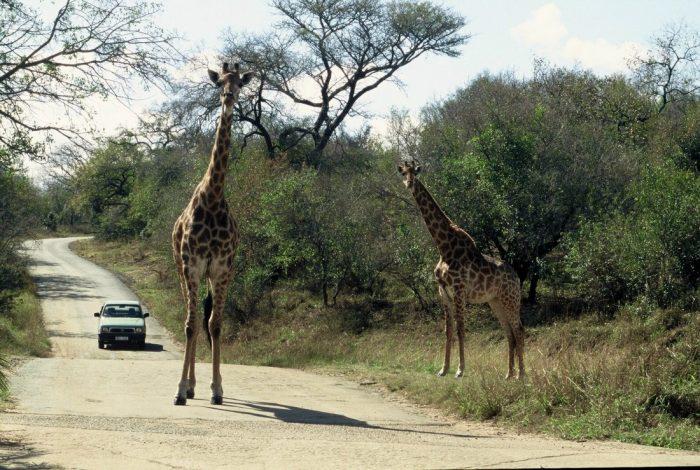 South Africa : East Loop Drive