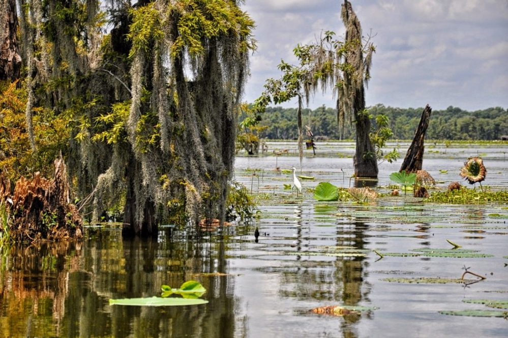 Louisiana : Lake Martin (Norbert Leblanc Swamp Tour)
