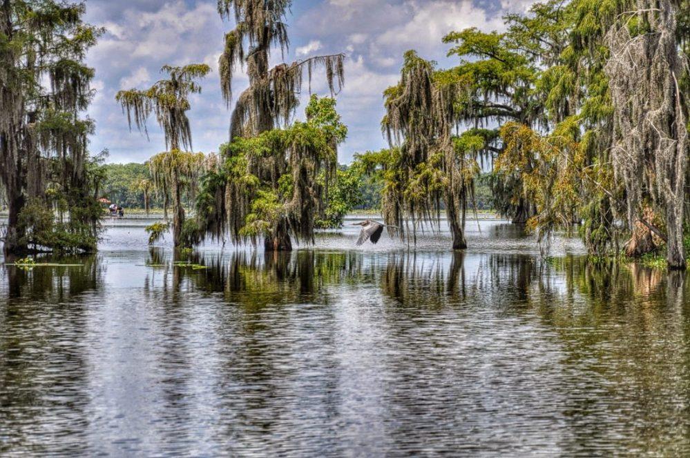Gallery Louisiana Bayous