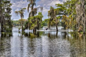 Louisiana Bayous