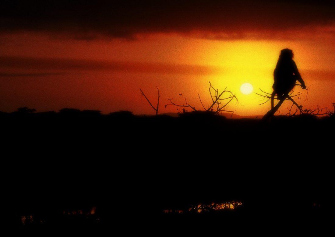 Kruger Park : Lower Sabie Rest Camp