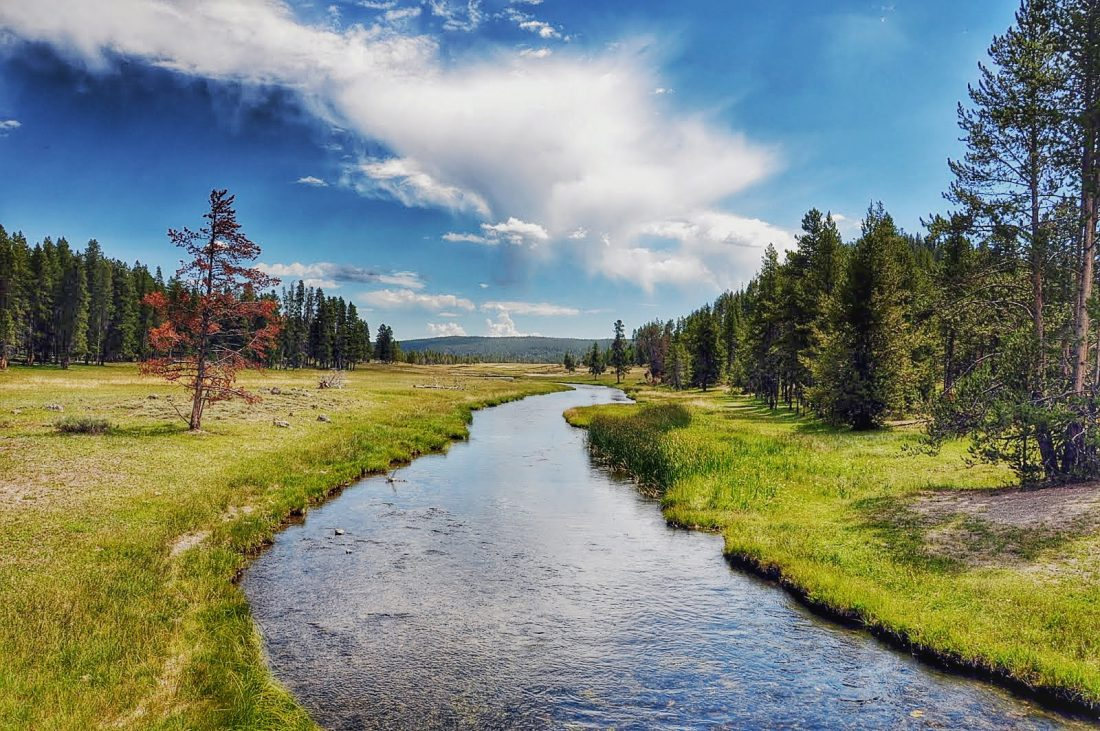 Yellowstone : Nez Perce creek