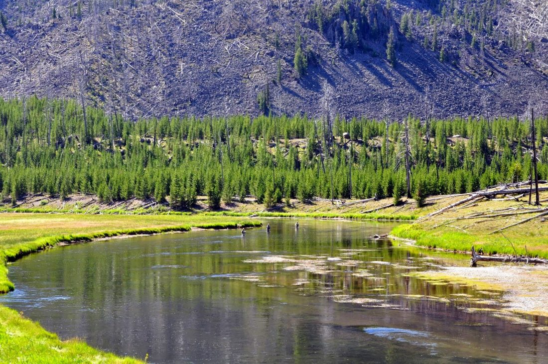 Yellowstone : Madison River fly fishing