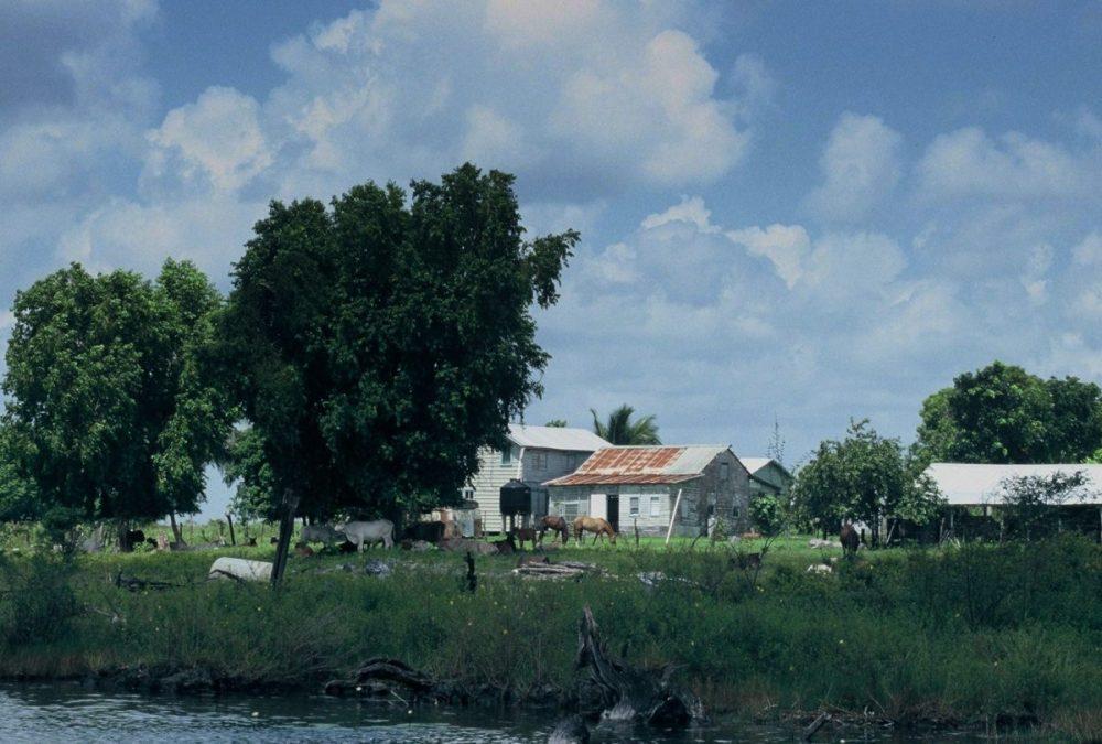 Lamanai River Tours : Menonnite area