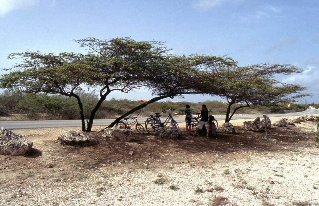 Bonaire : Shadow !!