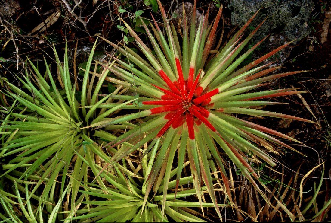 Curaçao : Christoffel National Park