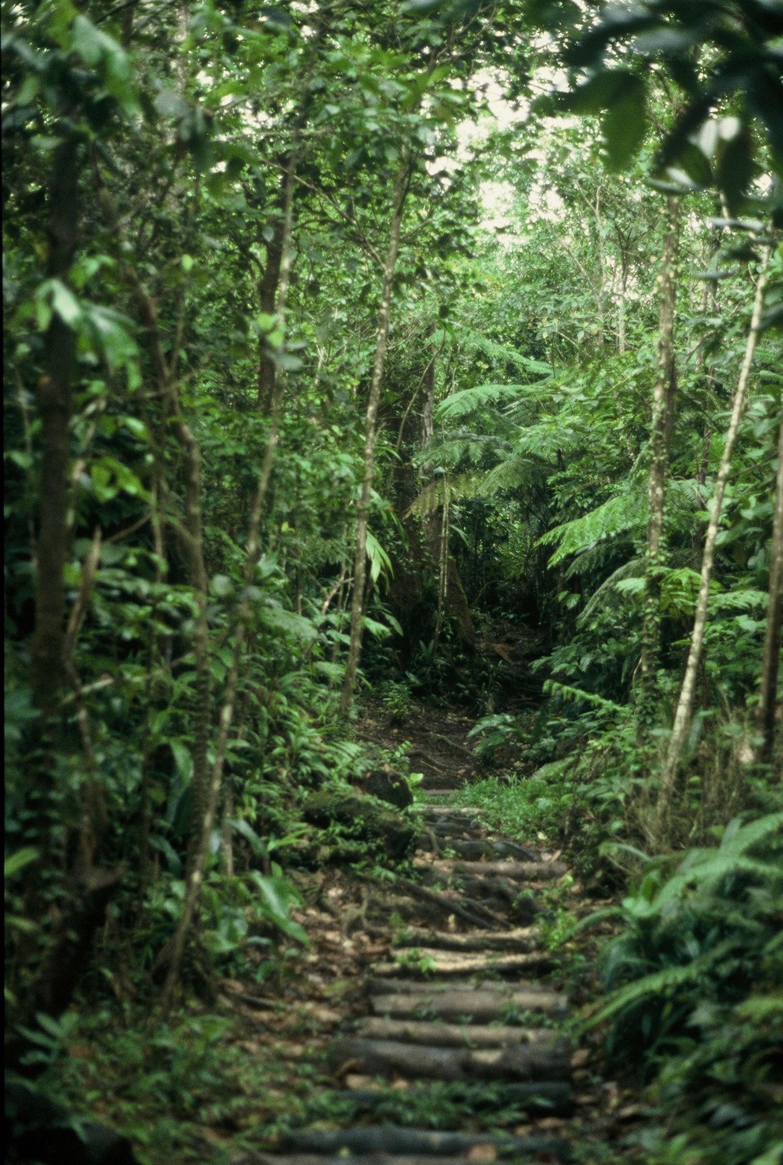 Dominica : Boiling Lake Trail