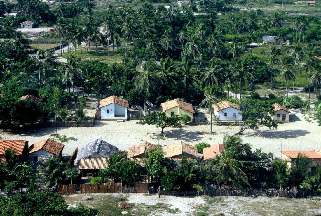 Maranhão : Mandacaru