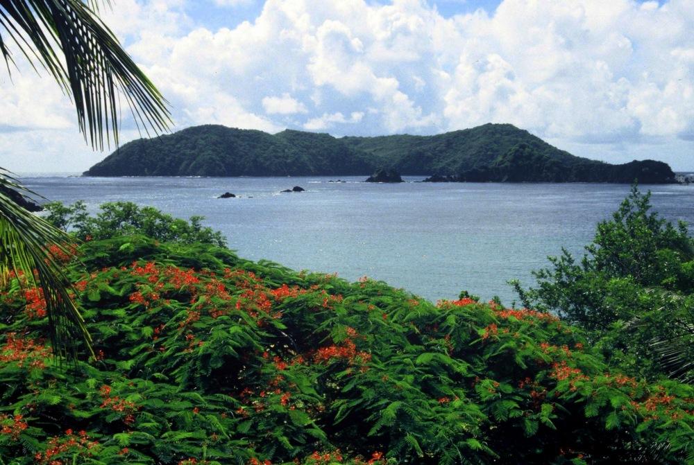 Tobago : Little Tobago
