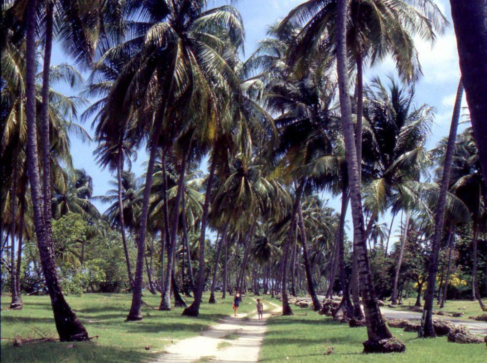 Tobago : Pigeon Point Heritage Park