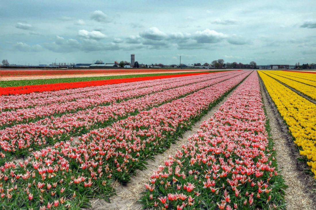 Zuid Holland : buite Keukenhof