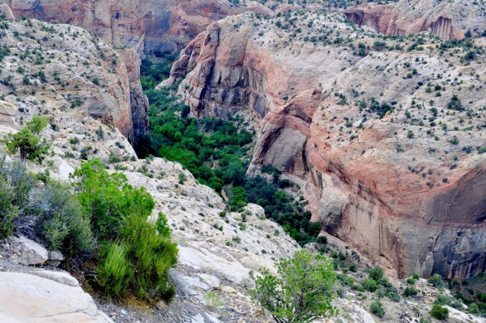 UTAH : Scenic Byway 12 : Calf Creek canyon