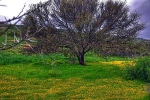 Previous Stop : Namaqua National Park