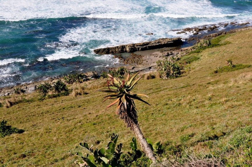 Lhuleka Nature Reserve : Coastline Trail