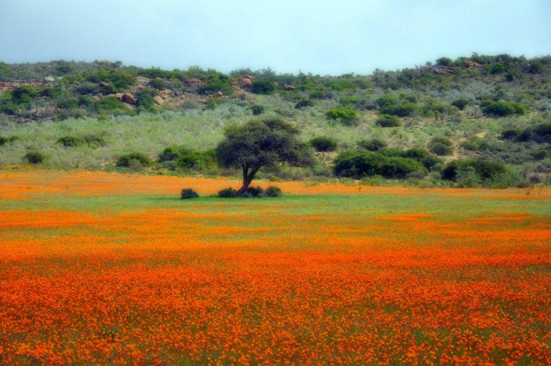 Namaqua National Park