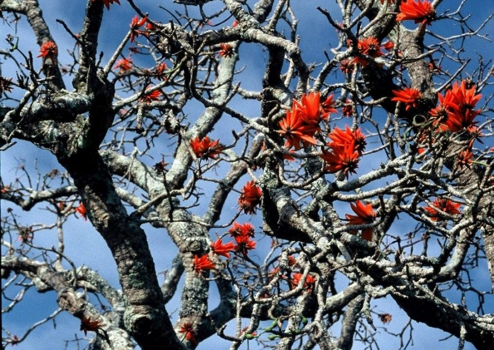 Swaziland : Matenga