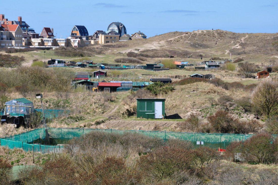Noord Holland : Egmond aan Zee duinen