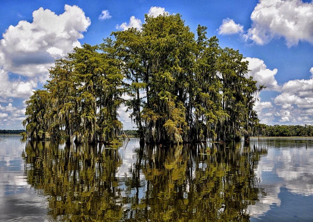 Louisiana : Lake Martin