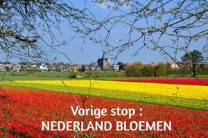 NEDERLAND BLOEMEN