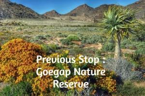 Previous Stop : Goegap Nature Reserve