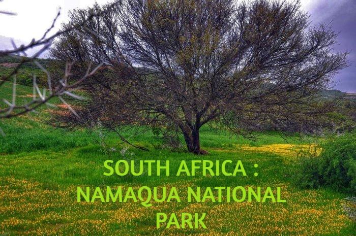 SOUTH AFRICA : NAMAQUA NATIONAL PARK
