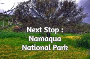 Next Stop : Namaqua National Park